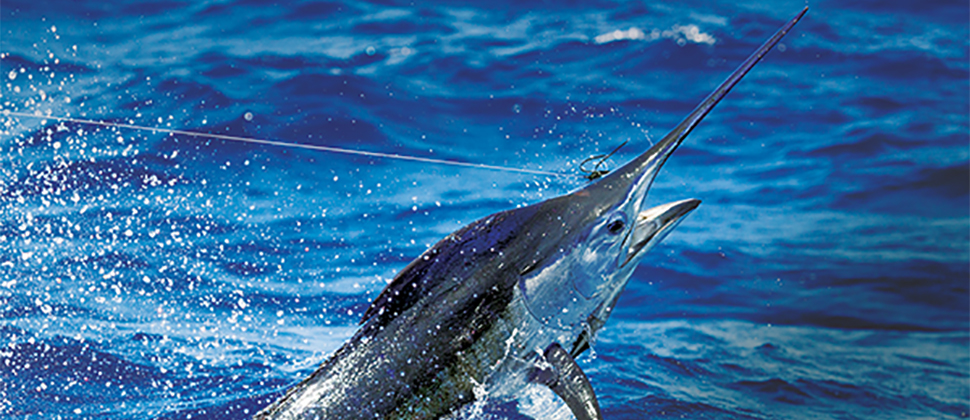 Marlin Magazine Names The Abacos a Billfish Hot Spot